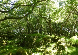 irish woodland galway