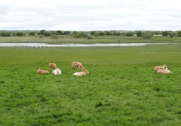 irish hnv remnant farmland