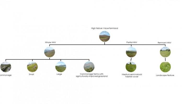 graph typogolgy ireland Contact