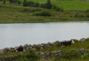 irish flood lands ireland disclaimer