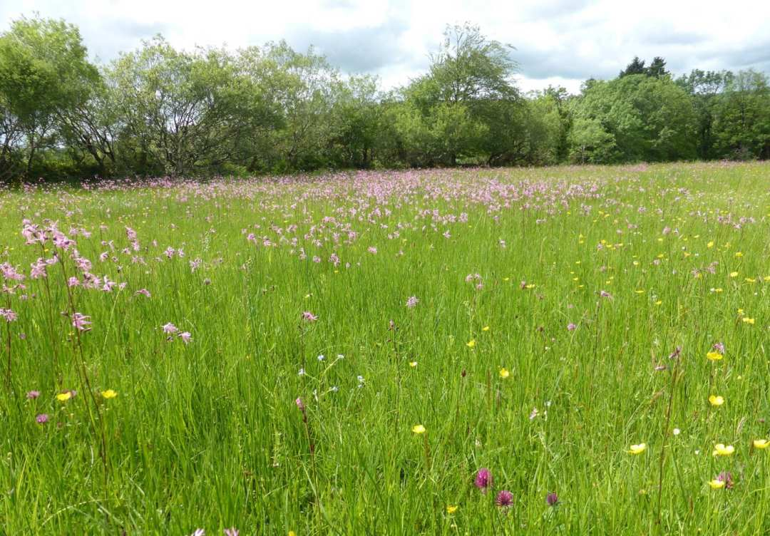wet irish grass field